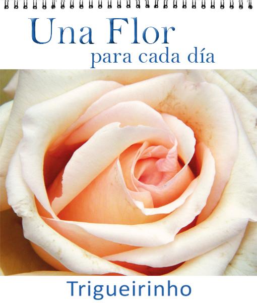 Una Flor para cada día – ESP. (Formato Pared)