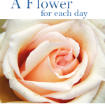 A Flower for each day – ENG. (Wall-Format)